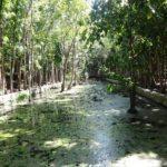 Menko Rizal Mengunjungi Hutan Rakyat di Labuan Bajo5