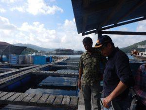Asdep Infrastruktur Pelayaran, Perikanan dan Pariwisata Rahman Hidayat meninjau keramba ikan kerapu dan napoleon di Kepulauan Anambas. - Dok.Humas Maritim
