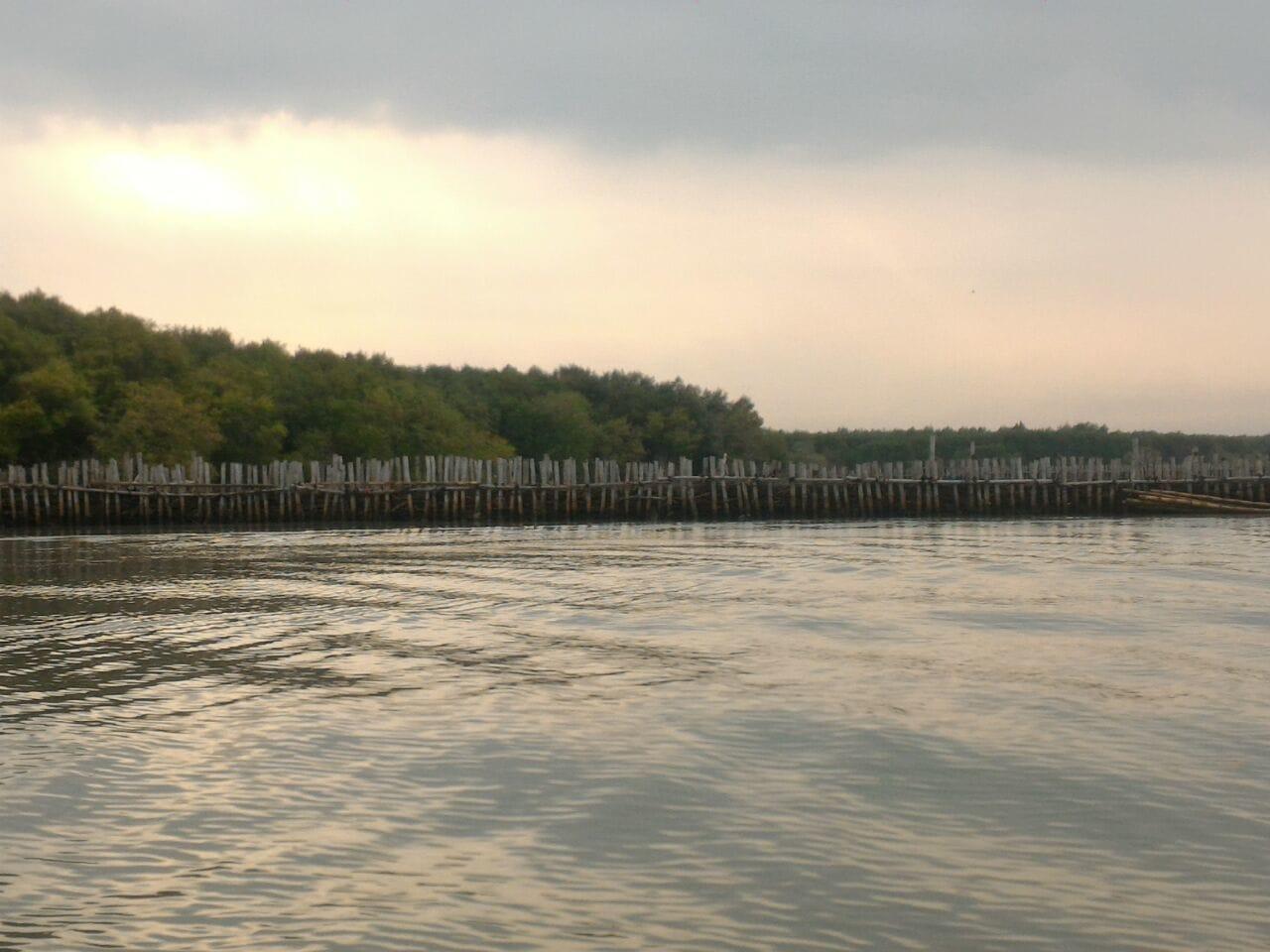 Jaga Kelestarian Kawasan Pesisir, Pemerintah Gandeng Pihak Swasta Tanami Mangrove