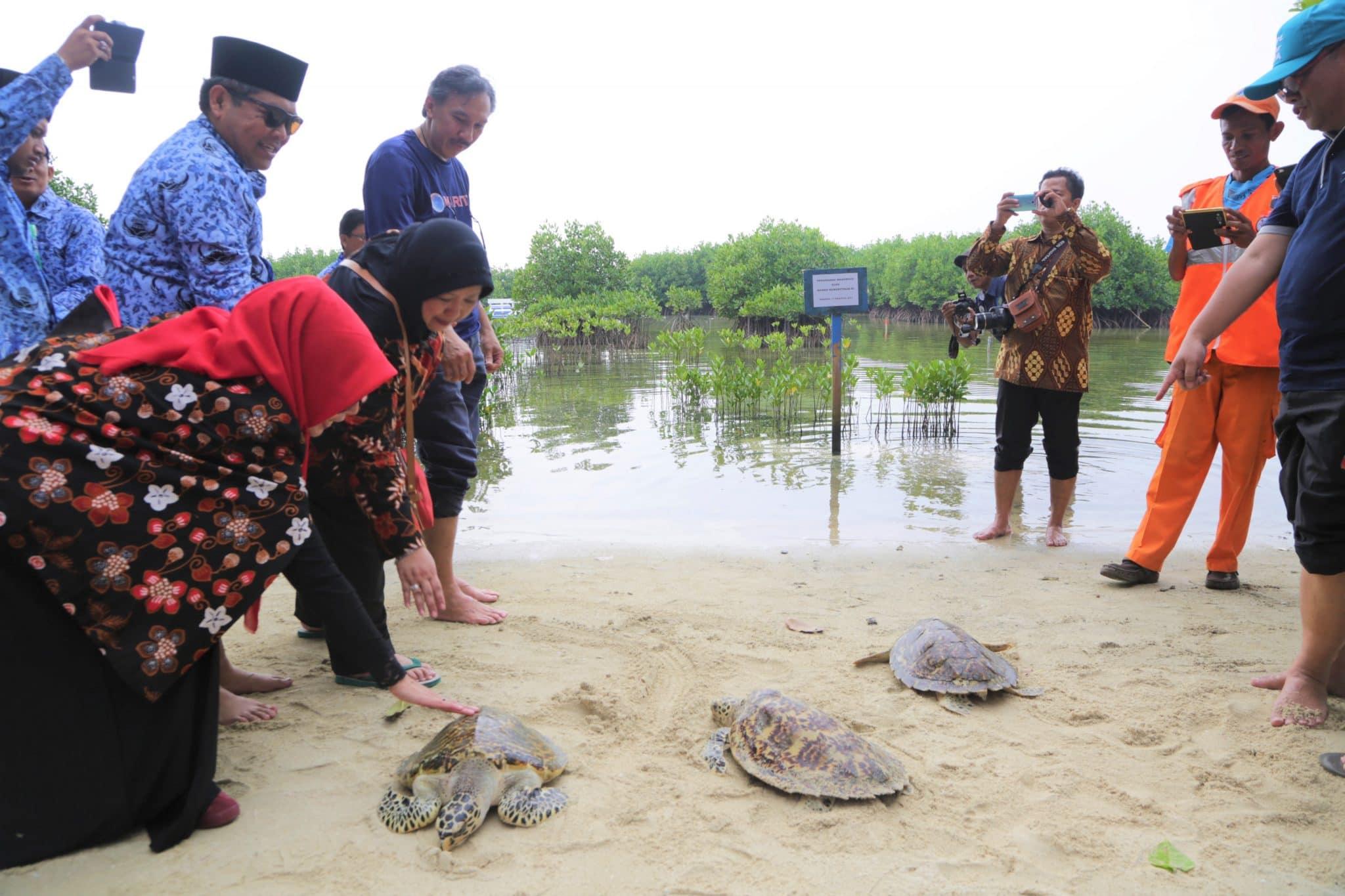 Usai Upacara HUT RI Ke-72, Deputi Kemenko Maritim Tabur Bunga hingga Pelepasan Penyu di Sekitar P. Seribu