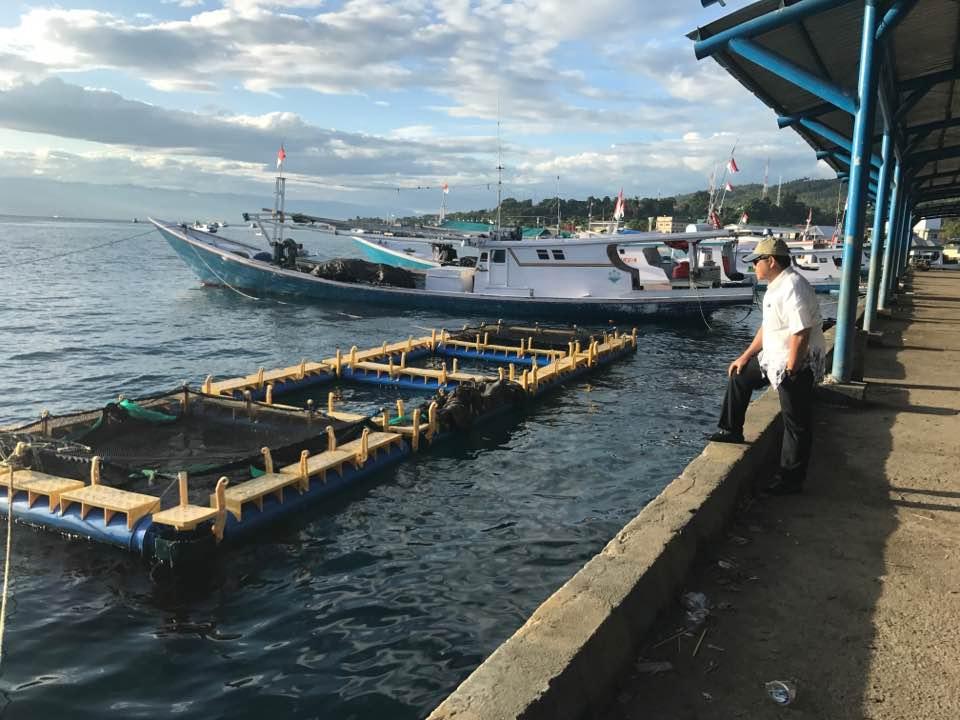 Kemenko Maritim Dorong Pengembangan Aquaculture Bandeng Secara Nasional