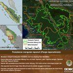 infografis-orangutan-5
