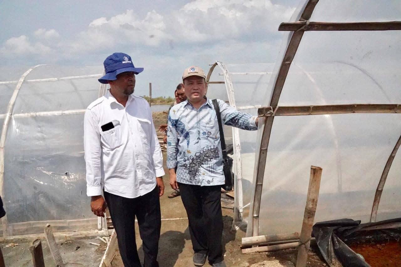 Gunakan Sistem Tunnel, Produksi Garam Di Kab. Pidie Aceh Lebih Maksimal