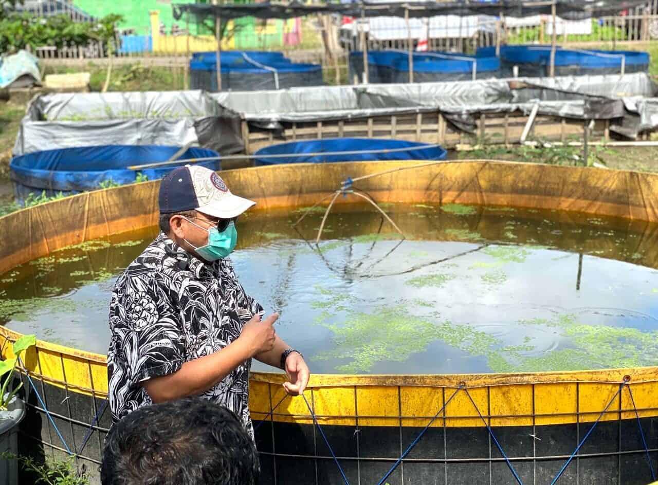 """Kunjungi """"Kampung Iwak"""", Deputi Safri Fokus Pengembangan Ikan Hias"""