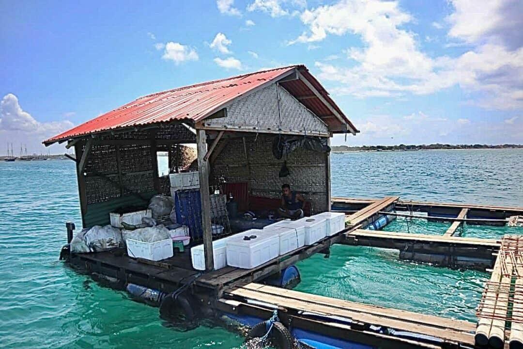 Bangkitkan Perekonomian di Bali, Pemerintah Buat Program PEN Terumbu Karang
