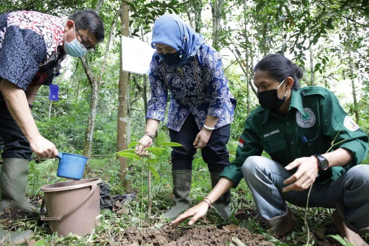 Menko Luhut : Perlu Kerja Bersama Menjaga Hutan