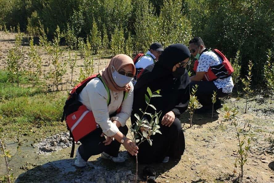 Indonesia UAE Segera Memulai Kerja Sama Pengembangan Mangrove