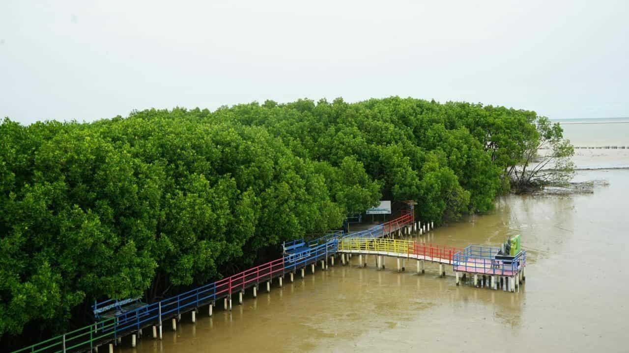 Desa Wisata Bahari Mangrove: Sebuah Kebanggaan dari Brebes