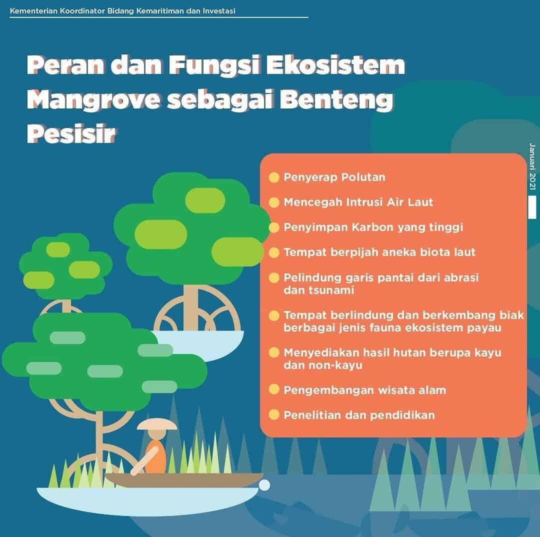 Peran dan Fungsi Ekosistem Mangrove sebagai Benteng Pesisir