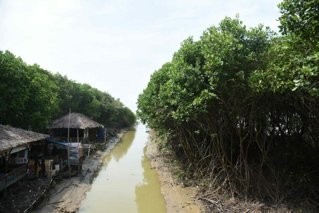 Persemaian Mangrove Skala Besar dan Mangrove Center of Excellence Terwujud, Indonesia akan Jadi Pusat Mangrove Dunia