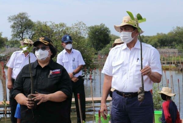 Menko Luhut Resmikan Program Rehabilitasi Mangrove Nasional