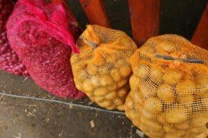 Panen Perdana di Food Estate Humbang Hasundutan, Menko Luhut: Hasilnya Sangat Baik