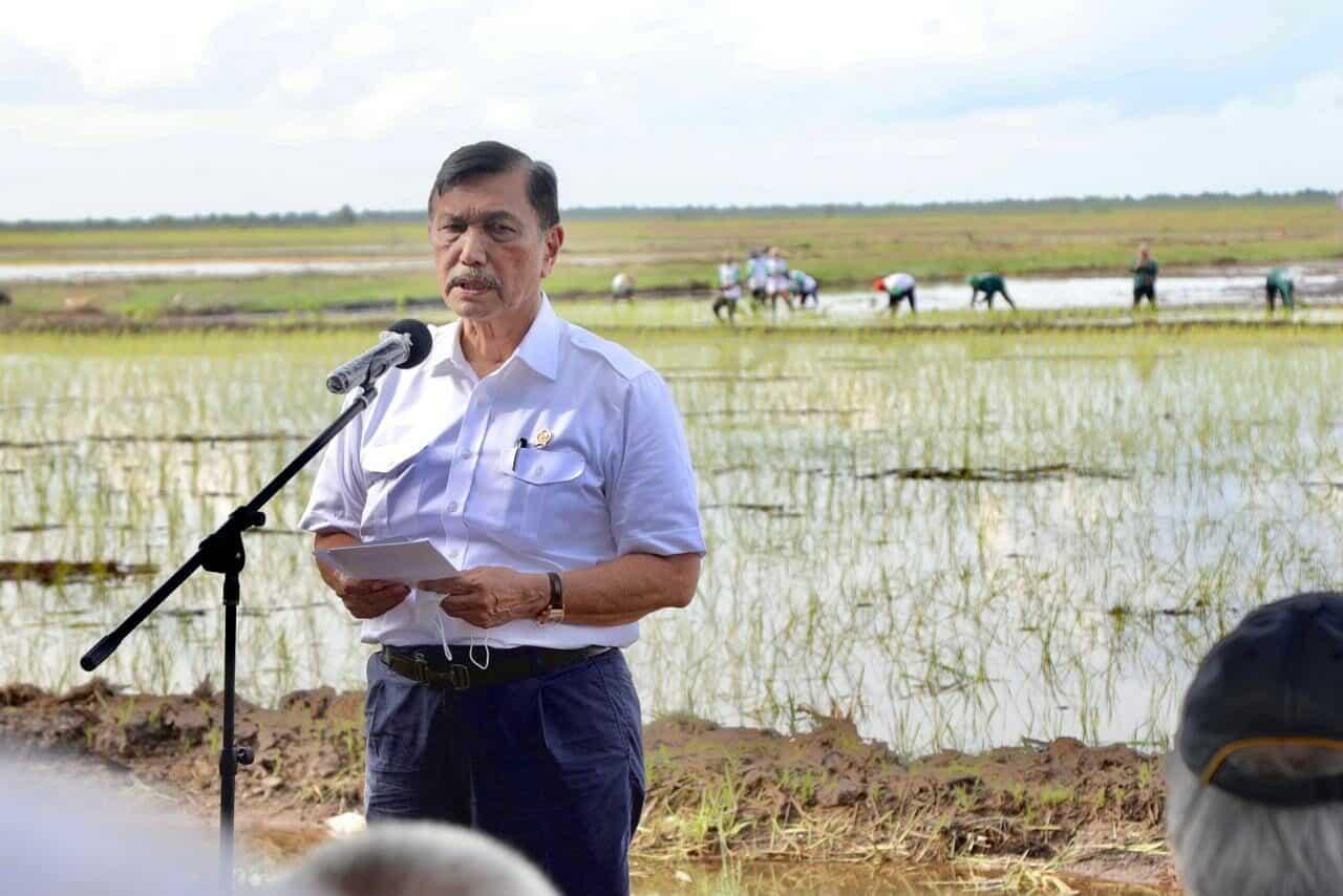 Tinjau Kawasan Lumbung Pangan Di Kalimantan Tengah, Menko Luhut: Integrasikan Seluruh Aspek Pembangunan Kawasan ini dari Hulu ke Hilir